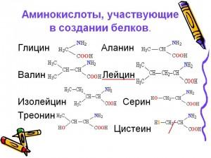 0009-009-Aminokisloty-uchastvujuschie-v-sozdanii-belkov