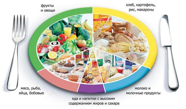 Сушка для организма питание