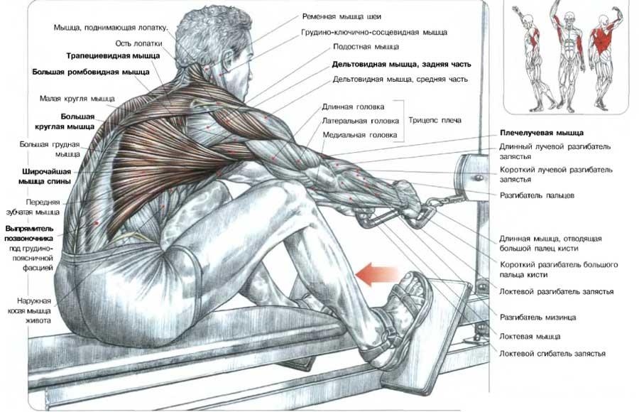 Анатомия тяги горизонтального блока