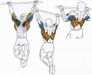 Анатомия мышц на турнике