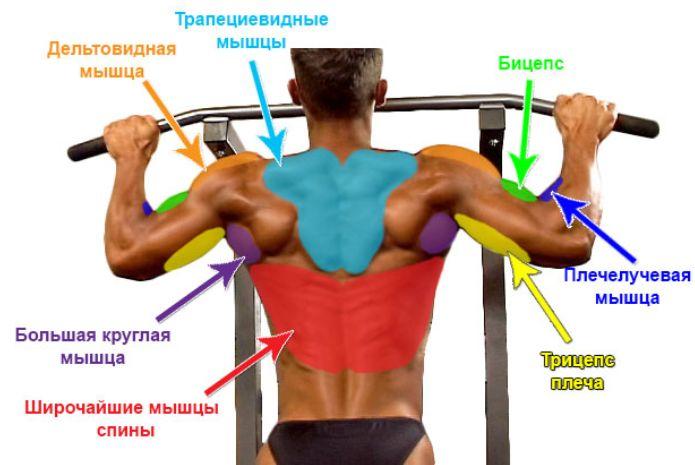 мышцы при подтягивании