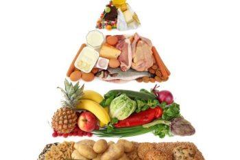 метаболизм1