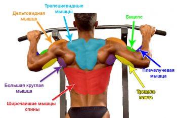 подтягивания-мышцы