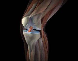 коленный-сустав